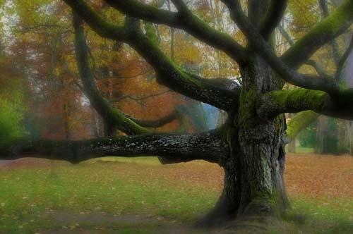 Bognár Róbert::A vén göcsörtös fa álma