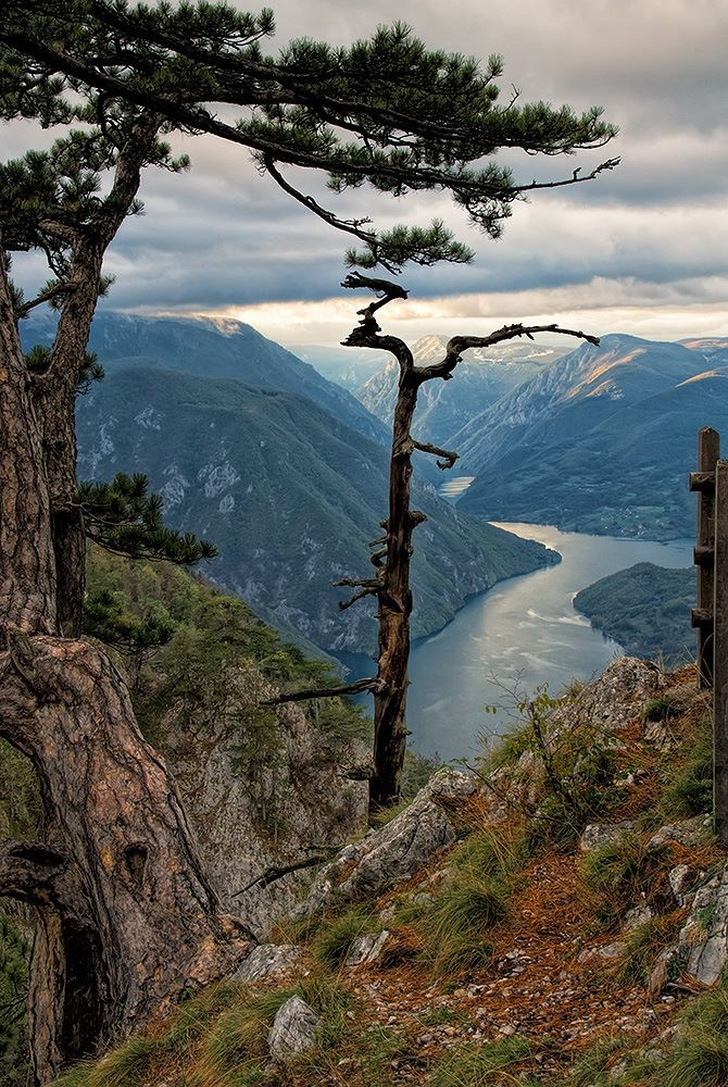 Tara Nemzeti Park