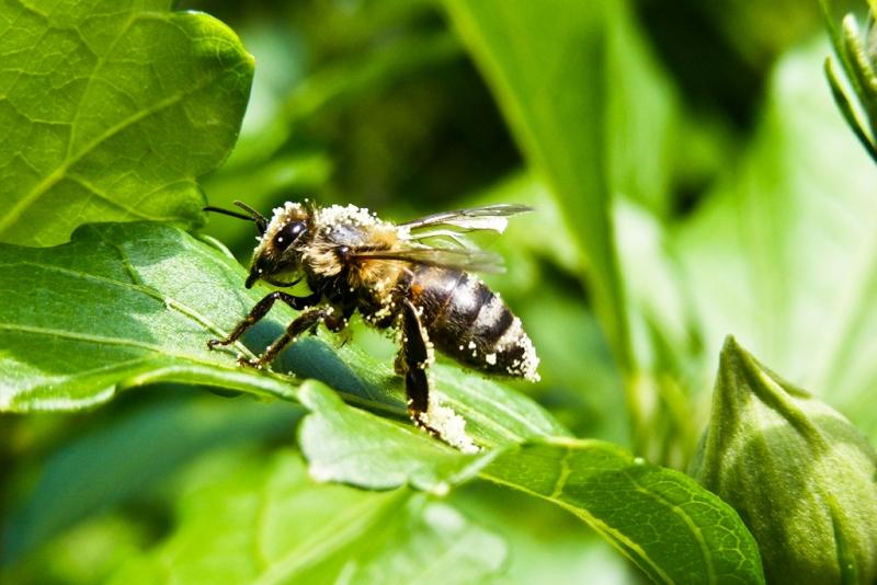 Farkas Máté:: Bee