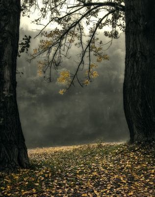 Dunapart ködben