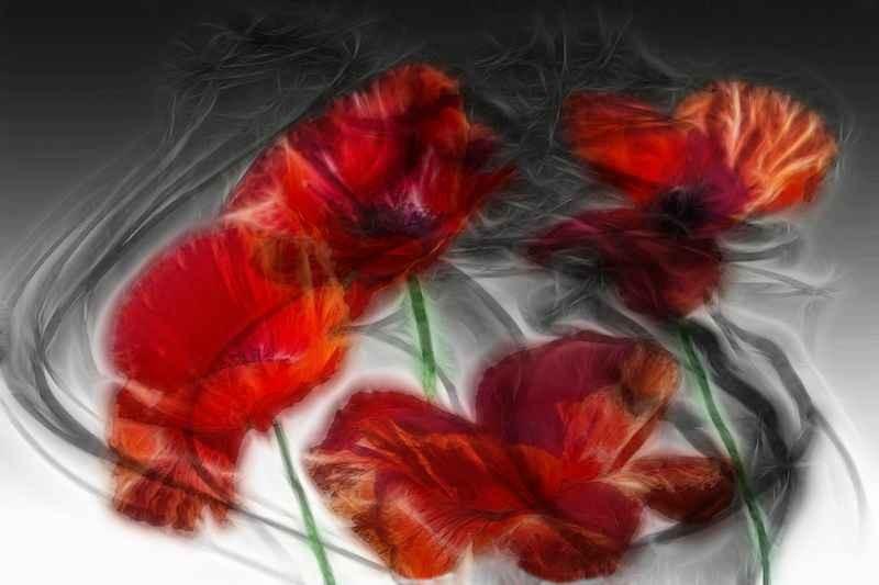 Stipsits Ibolya::Your memory